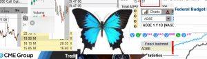Butterfly – II.